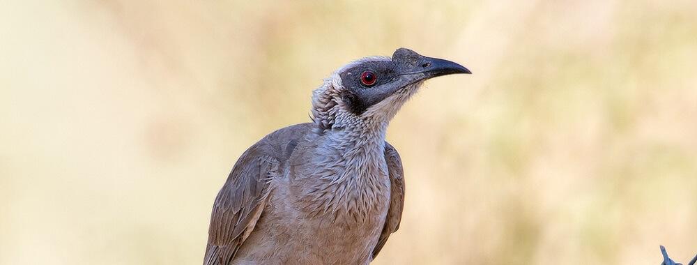 The Colourful Bird Species of Kakadu National Park