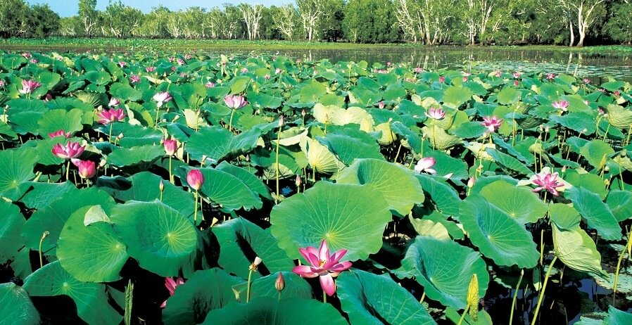 Kakadu Day Tours I