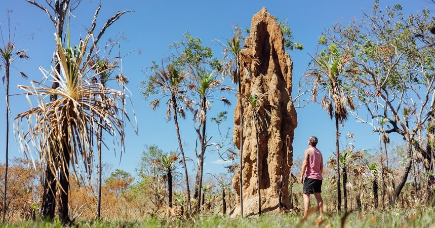 Kakadu and Litchfield Tour Termite Mounds