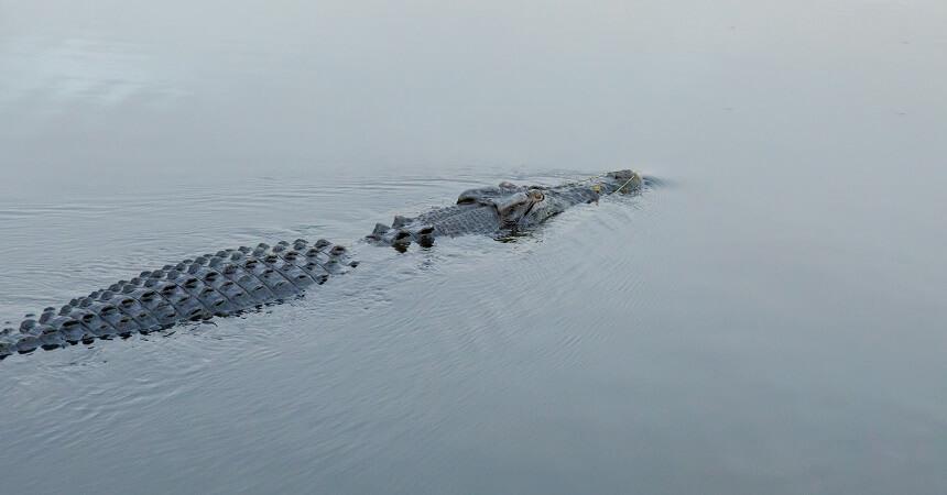 1 DAy Kakadu Tour - Crocodile